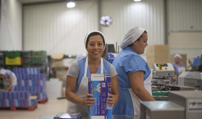 Estepa producirá en campaña cerca de 22 mil toneladas de dulces navideños